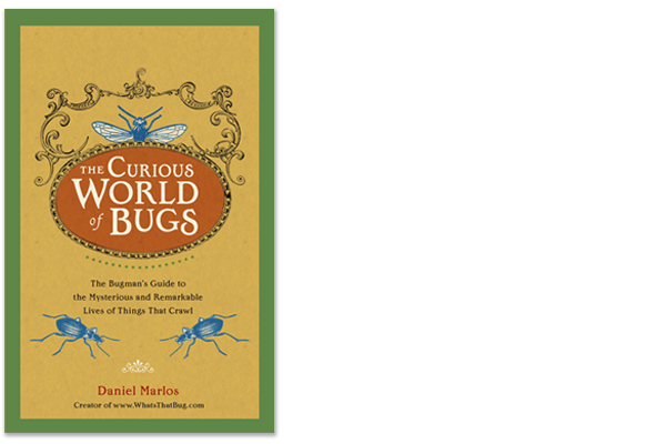 Curious World of Bugs